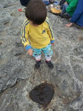 Puddle on Eagle Rock -- Nahuelbuta