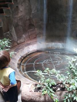 Indoor waterfall -- Huilo-Huilo Hotel