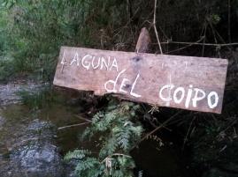 Creek bed lagoon in Chiloé