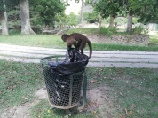 ...pick the garbage...