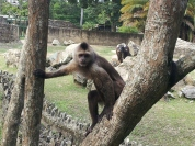 The cage free monkeys...