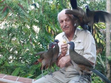Feeding guacharacas.