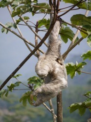 Hanging out with sloths.