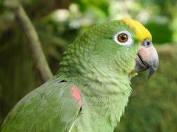 Family's pet parrot.