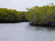 Mongrove Islands