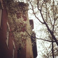 City in bloom
