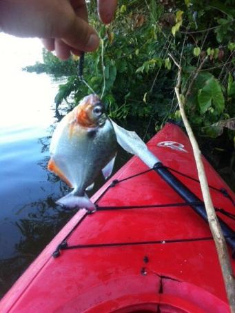Piranha fishing