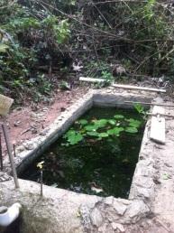 Frog pond under construction.