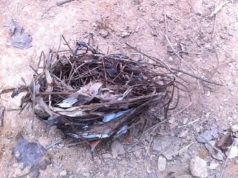 Fallen bird nest.